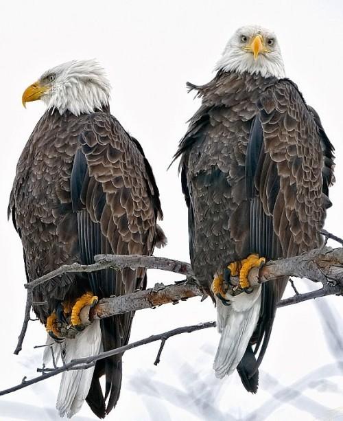 eaglesjpeg